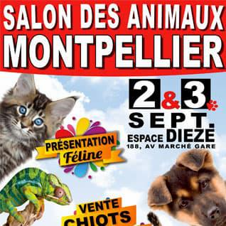 veterinaire domcile montpellier vaccin vaccination